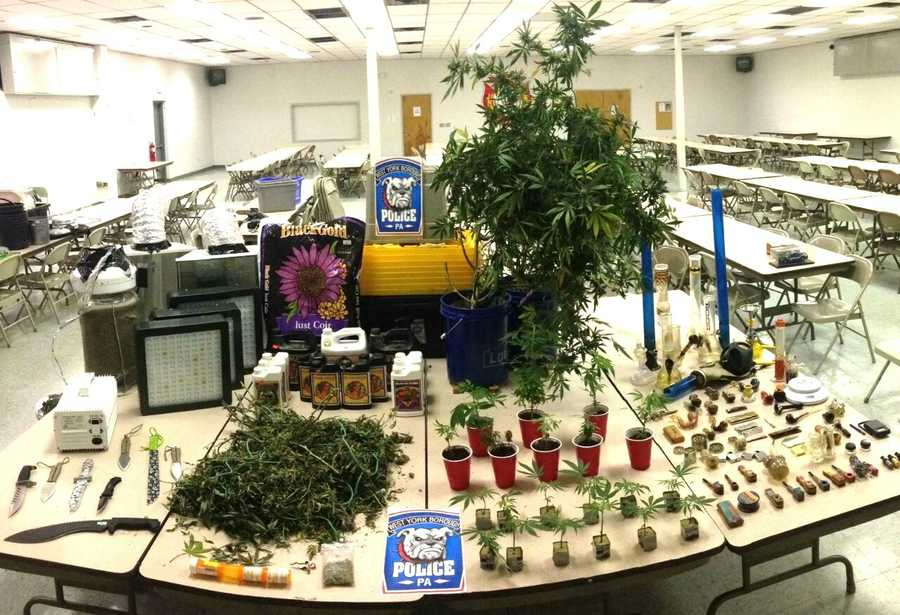 A mother and son have been arrested for running a large indoor pot operation in the Borough of West York.