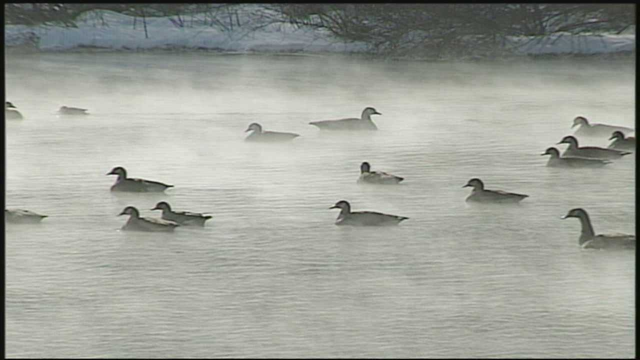 Recently, News 8 has received letters from viewers wondering if geese flying habits tell us how long winter will last.