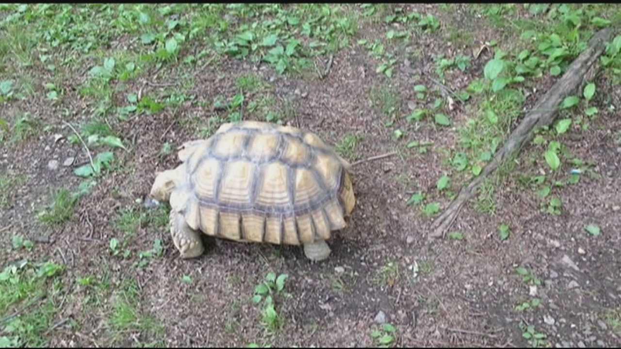 5.9.15 Tortoise