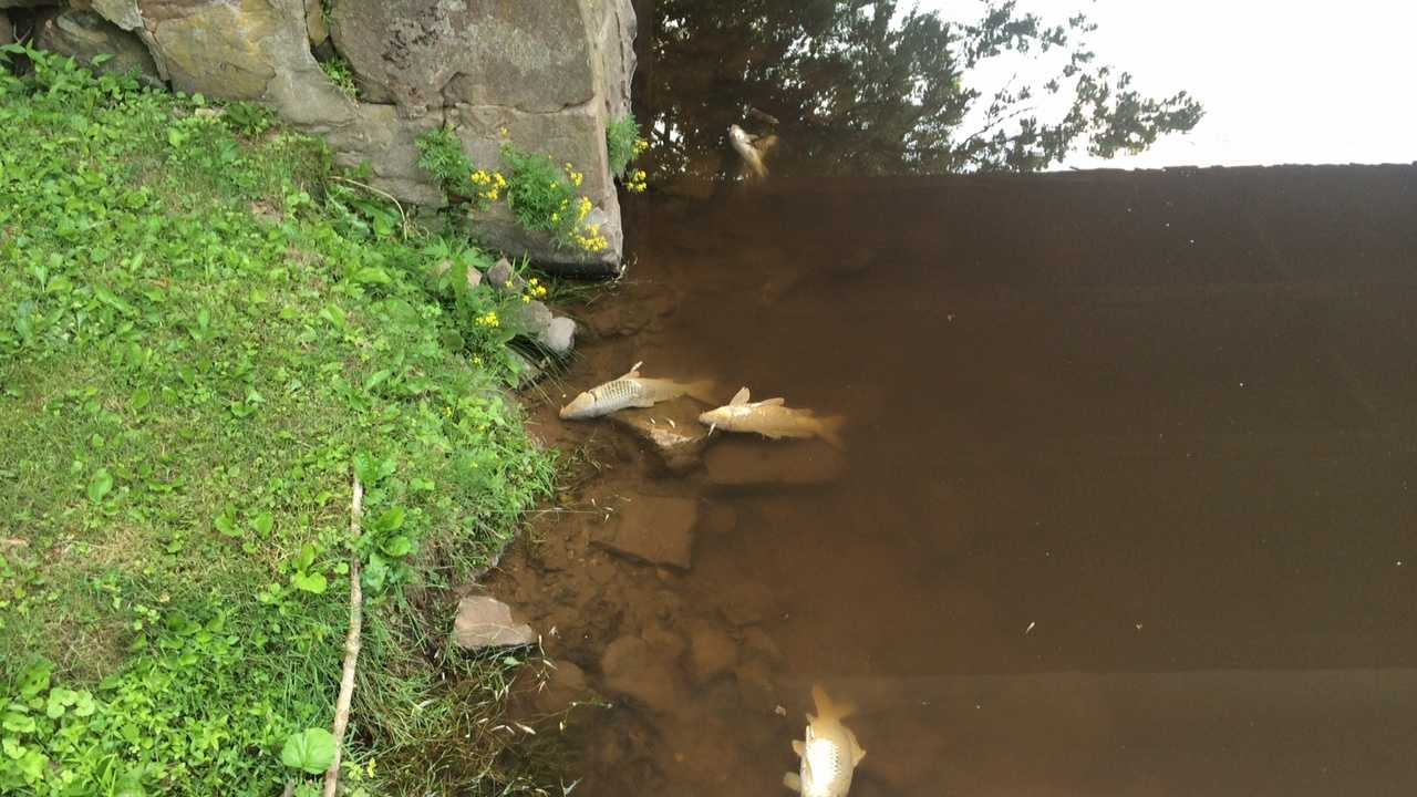 The DEP says chemicals from the Miller Chemical and Fertilizer fire contaminated nearby soil and water, killing dozens of fish in the Conewago Creek.