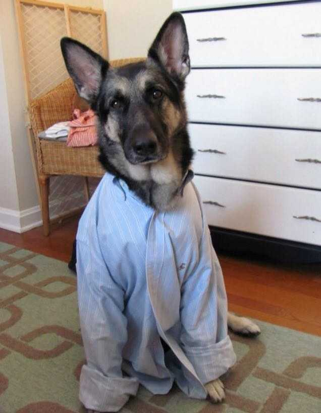 Harper Lee: A rescued German Shepherd from Manheim Township, Lancaster County