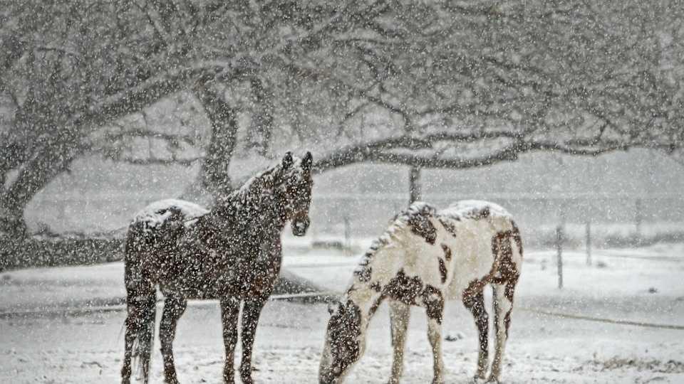 horse-419743_960_720.jpg