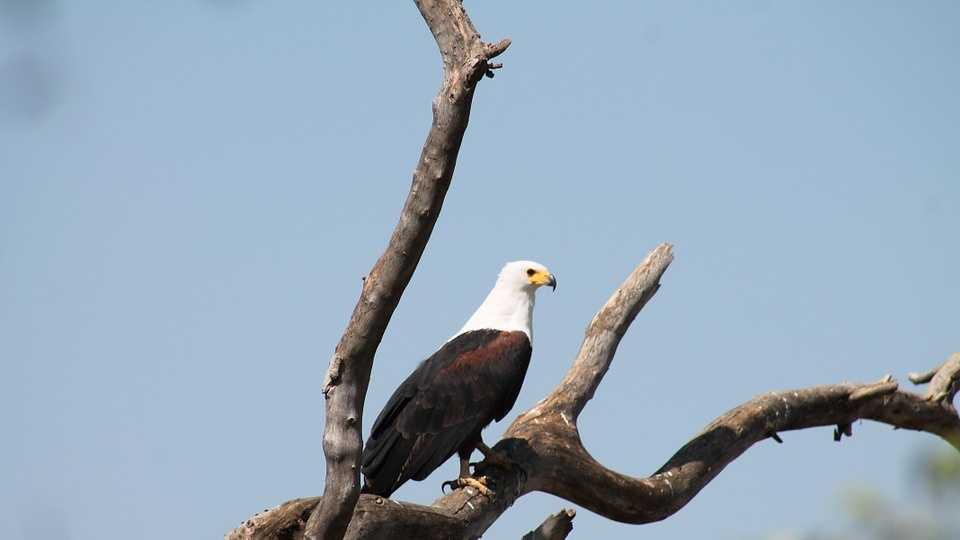 eagle-950056_960_720.jpg
