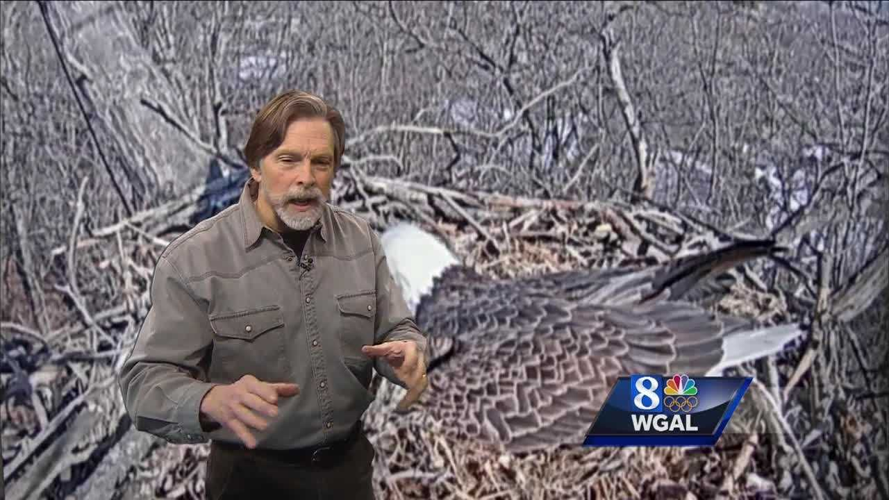 News 8's Jack Hubley tells us when the bald eagle eggs will hatch