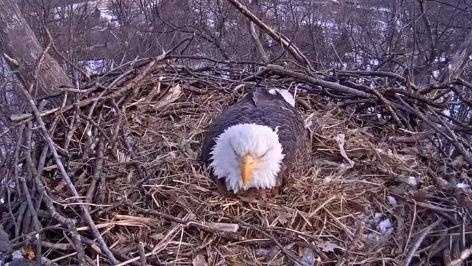 File Photo: Hanover Eagle Cam (Not Pittsburgh Eagle Cam)