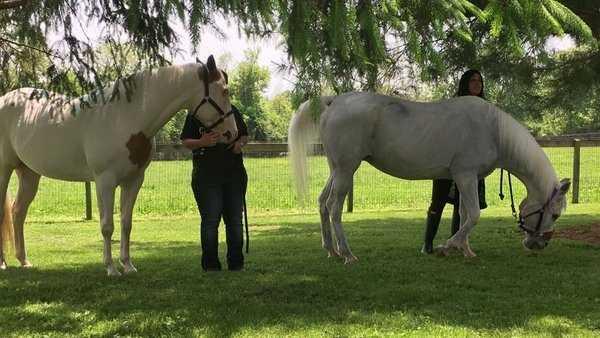horse-01-jpg.jpg