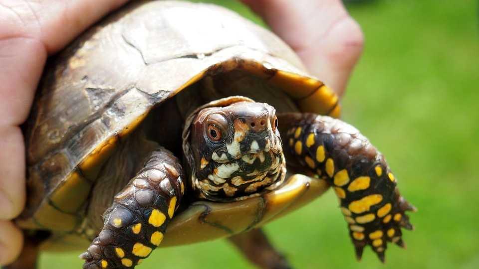 8.24.16 pixbay turtle.jpg