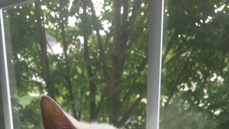 cat PIC 9.21.16.jpg