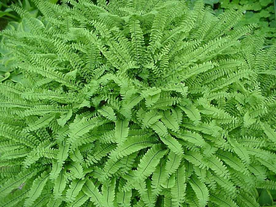 Pteridophobia: For some, being near ferns is too frightening.