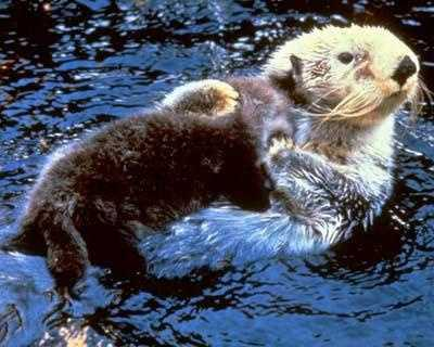 Lutraphobia: While some people think they're cute, others are afraid of otters.
