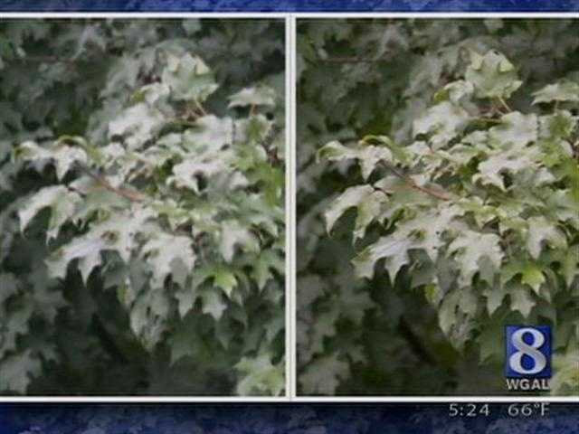 Whenever you take a photo with a low resolution, you end up with a photo that looks pixelated and blurry when it's blown up (like the photo shown on the left).