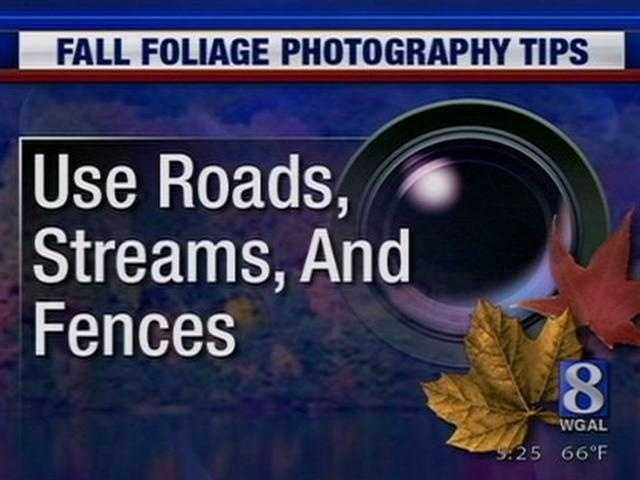 4. Include streams, roads, and fences whenever possible because they offer what's called a leading line.
