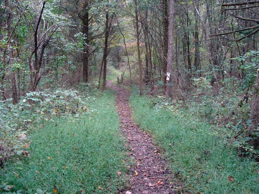 The trail surface is dirt and can be rocky and there are some wet areas near the campground entrance. Stay on the trail to avoid prickly ash. Butterflies may be abundant near openings in the forest.