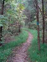 This trail begins near the campground entrance where it intersects the Lakeside Trail, then meanders through old overgrown pasture, then climbs into a maturing oak and hickory forest along the top of Straight Hill.