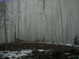 Fog is a cloud on the ground composed of billions of tiny water droplets floating in the air.
