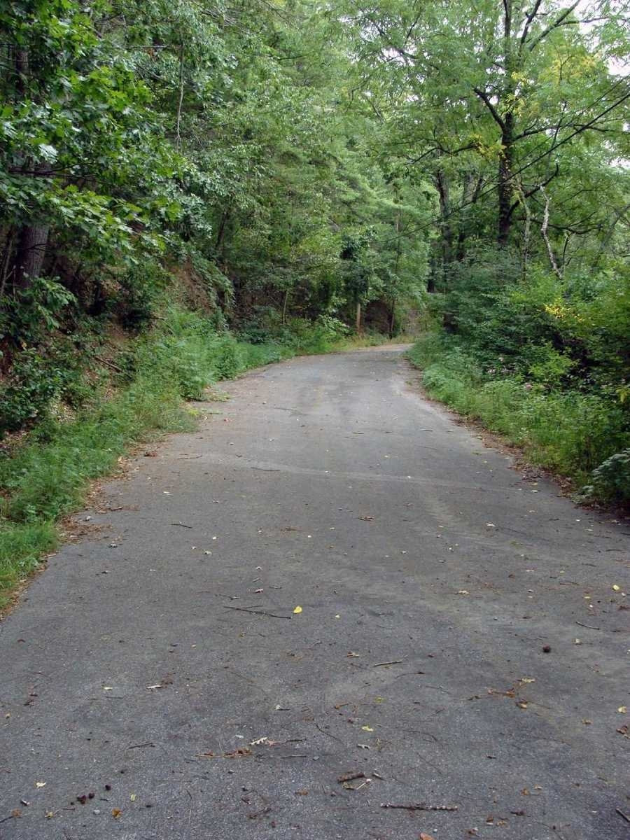 """The trails are considered """"most difficult"""" by DCNR trail standards, but """"easy"""" by International Mountain Bike Association standards. Each trail loop is about 1.5 miles in length and twist through the woods and up and down hills."""