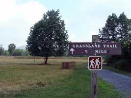 The Grassland Trail (0.4 mile) passes by the butterfly field and the Locust Grove.