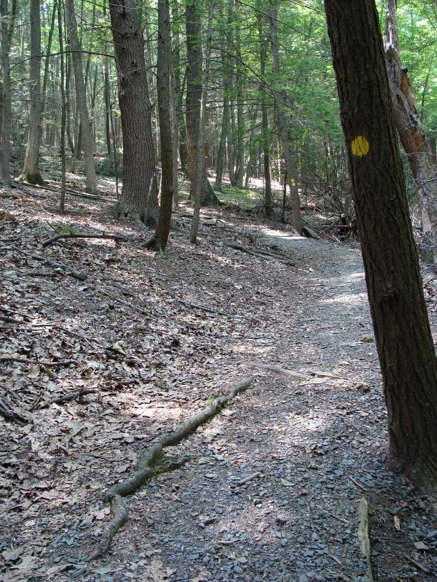 A dense canopy of hemlock trees allows very little sunlight to reach the forest floor making for a relatively cool walk even on the warmest days.