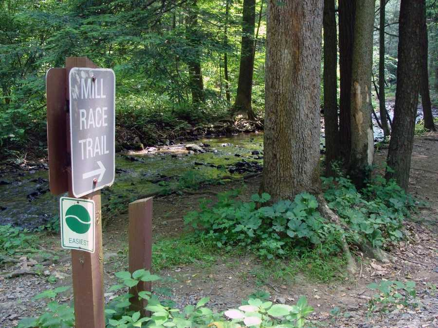 The Middle Ridge Trail, which is 2.5 miles long, is a good place to see turkey, grouse and also large colonies of Allegheny mound-builder ants.