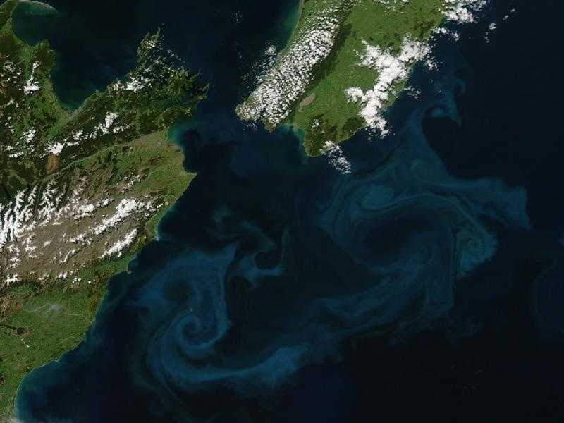 Off the east coast of New Zealand, cold rivers of water that have branched off from the Antarctic Circumpolar Current flow north past the South Island and converge with warmer waters flowing south past the North Island. The surface waters of this meeting place are New Zealand's most biologically productive. This image of the area on October 25, 2009, from the MODIS sensor on NASA's Aqua satellite shows the basis for that productivity: large blooms of plantlike organisms called phytoplankton.