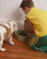 4. Socialize and train any dog entering your home. Teach the dog submissive behavior, such as giving up food without growling.