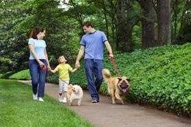 4. Spend time with a dog before you buy or adopt it.