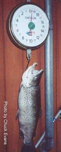 Trout, Brown (Salmo trutta): 19 lb. 10 oz. -- caught by Fazle Buljubasic of Erie in 2000 at Walnut Creek.