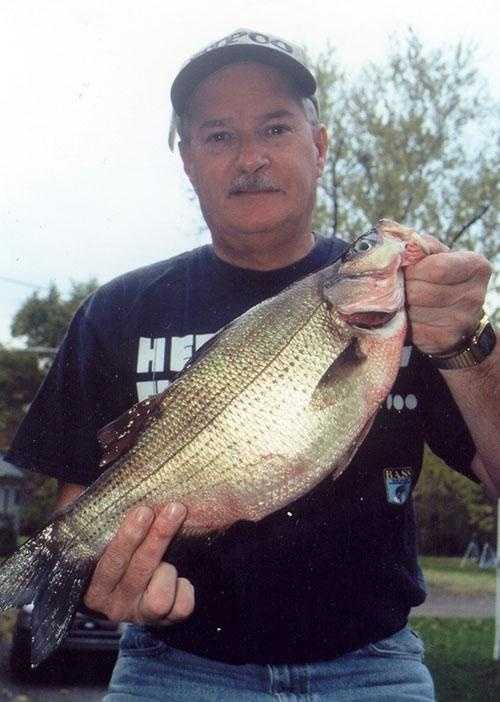 Bass, White (Morone chrysops): 3 lb. 15.7 oz. -- caught by Robert H. Hornstrom of Meadville in 2002 at Conneaut Lake.