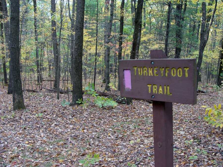 The Turkey Foot Trail is 0.6 mile of easy hiking and is marked with lavender blazes. Access the trail from the western end of Evergreen Trail. Turkey Foot Trail is a loop trail that offers many good opportunities to view wildlife.