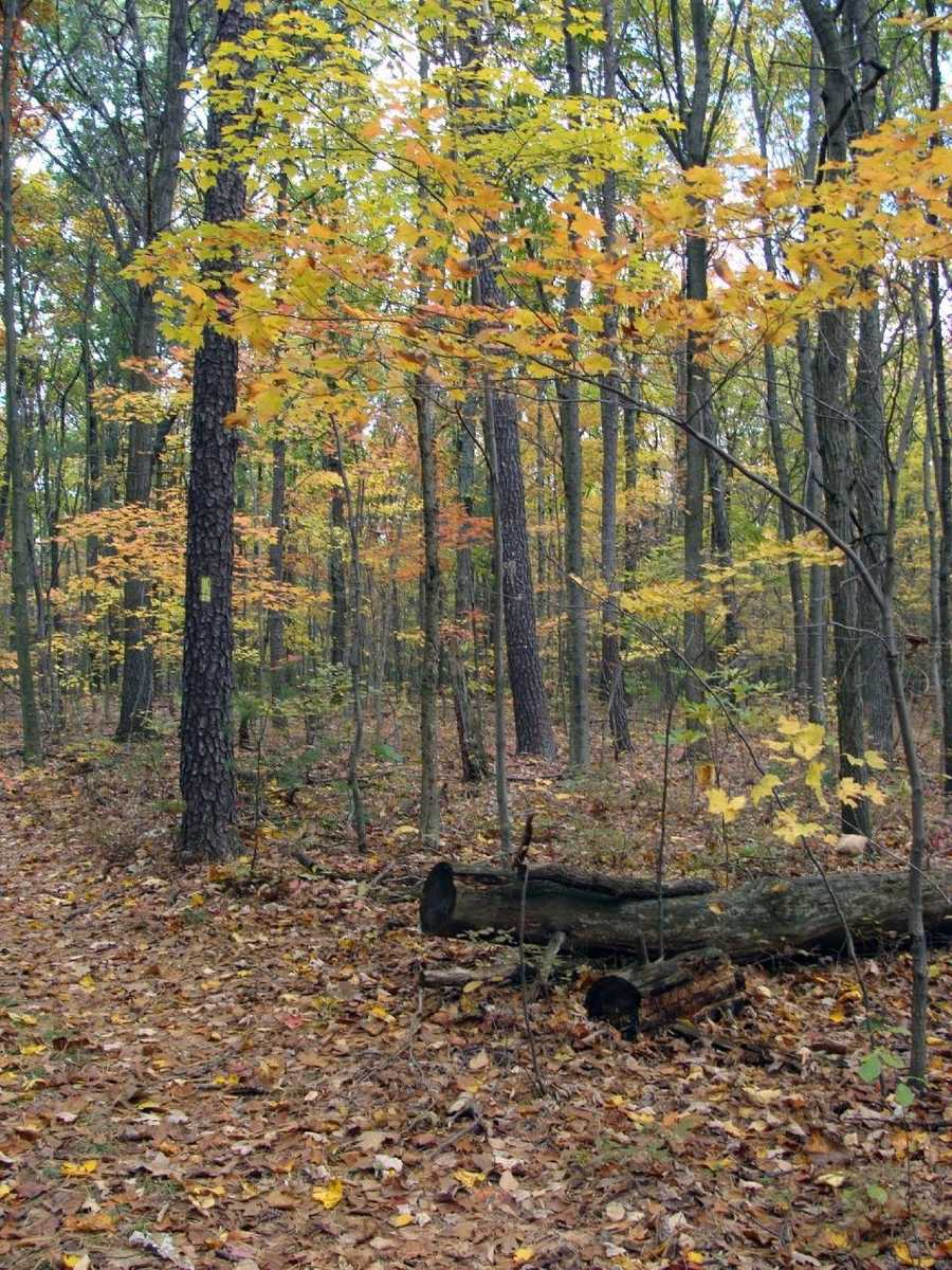 A conservation area is land that was donated to the Bureau of State Parks. The land is managed for the purposes of preserving open space, conserving natural resources, and providing opportunities for passive, non-motorized, low density outdoor recreation and environmental education activities.