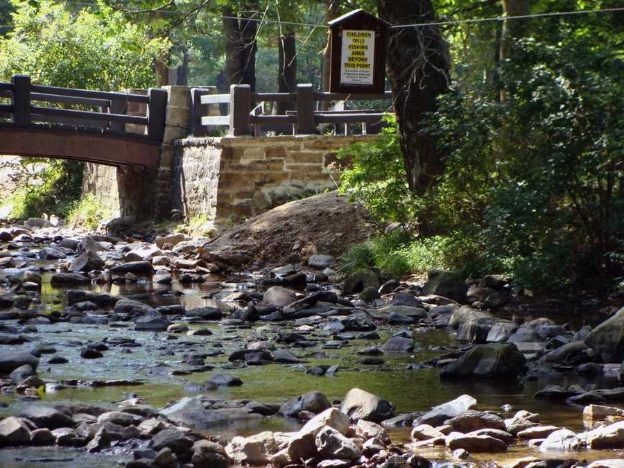 Brown trout, rainbow trout, native brook trout and some warm-water game fish can be found in the streams.