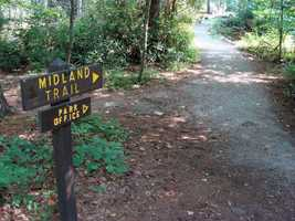 The Midland Trail is 0.7 miles and is a level walk under a heavy canopy of White Pine.