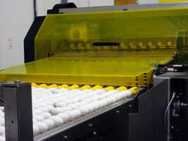 Before they are packaged, the eggs are separated by size.
