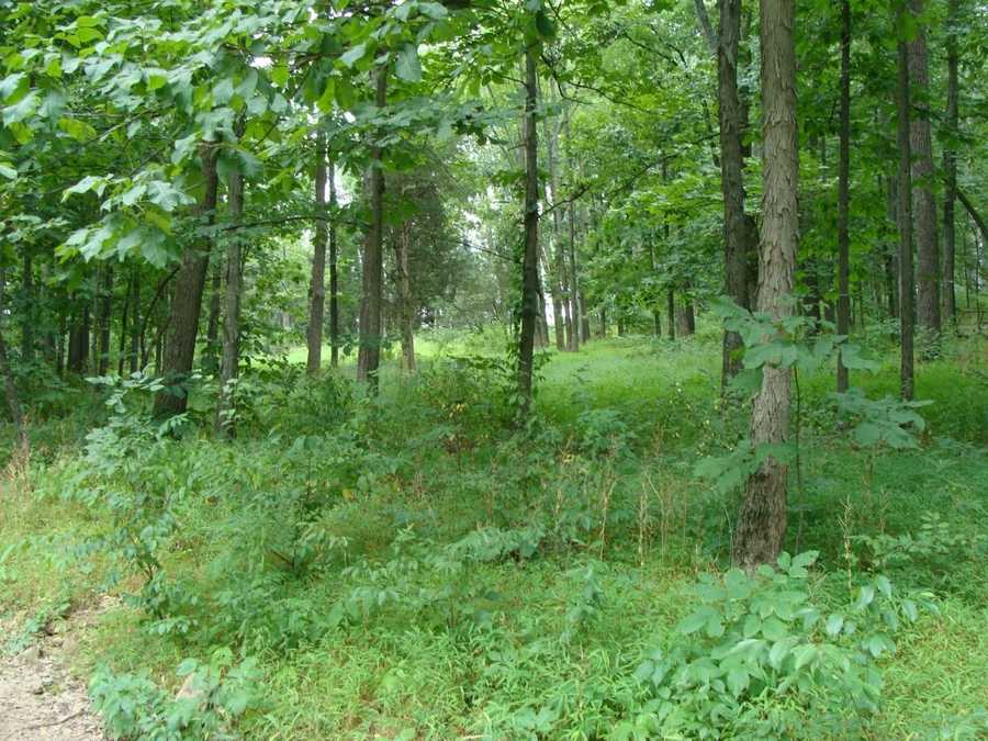 Seen here, McMillan Woods, was another area where Confederates were able to advance on days 1 and 2 of the battle.