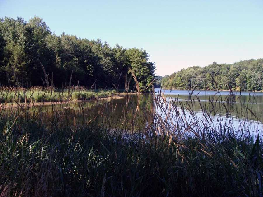 The wetlands make this an excellent area for birding year-round.