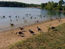 The lake is a magnet for birds, especially migrating waterfowl and shorebirds.