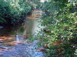 Mountain Creek, which flows through the park, has brown, brook and rainbow trout.