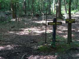 The Swamp Trail is one quarter of a mile. Hikers can explore a small, forested swamp filled with interesting plants and animals. The trail begins and ends on the bicycle path.