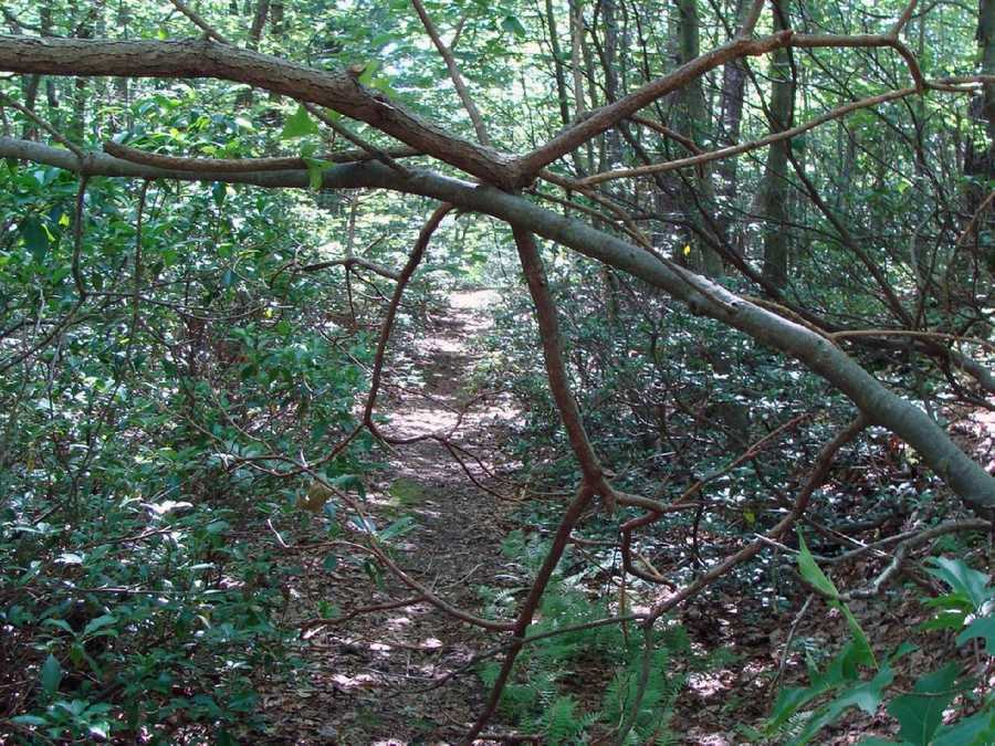 If you notice a problem on the trail that requires attention, click here to contact the Appalachian Trail Society.
