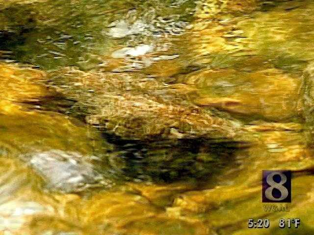 """We hope you've enjoyed this slideshow of Pa.'s record setting fish. If you would like to read the complete set of rules and regulations for the state's fish record program, <a href="""""""" target=""""blank"""" url=""""nofollow"""">click here</a> then scroll down the page."""