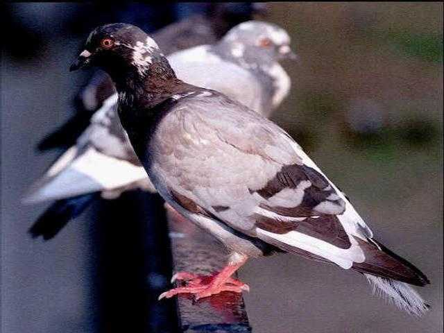 Ornithophobia: The fear of birds -- especially pigeons -- is referred to as ornithophobia, and is actually a fairly common phobia.
