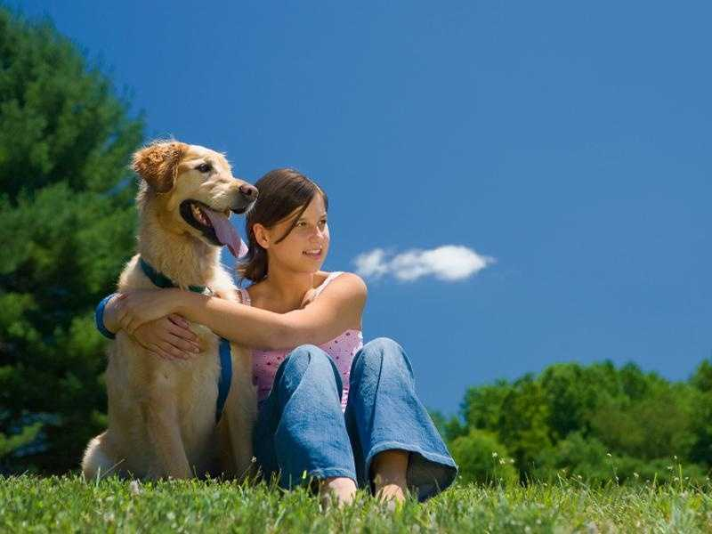 6. Do not pet a dog without allowing it to see and sniff you first.