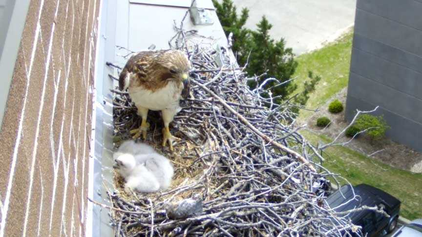 Hawk's nest live webcam