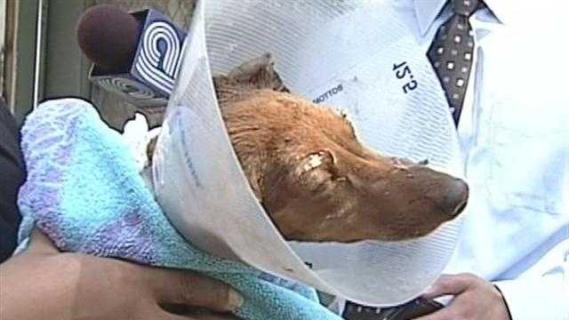 Dog Burned