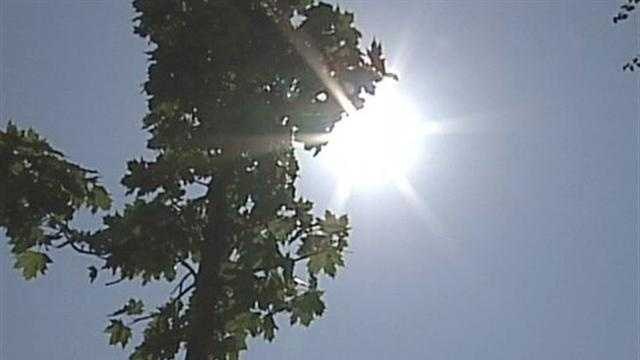 Milwaukee asks for help watering city trees