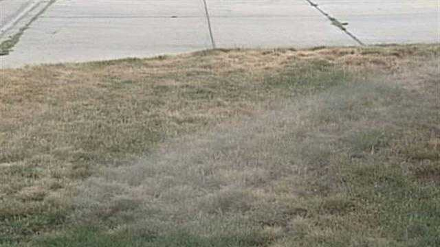 Recent dry spell has kept some residents racing to save their yards.