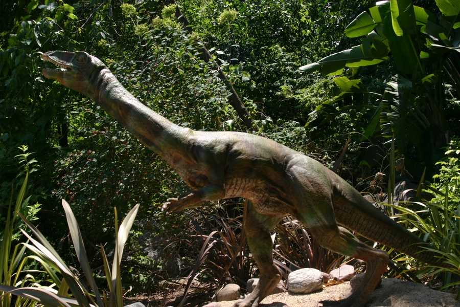 "The meat-eating Coelophysis (see-low-FIE-sis) or ""Hollow-Form"" roamed North America in the late Triassic period."