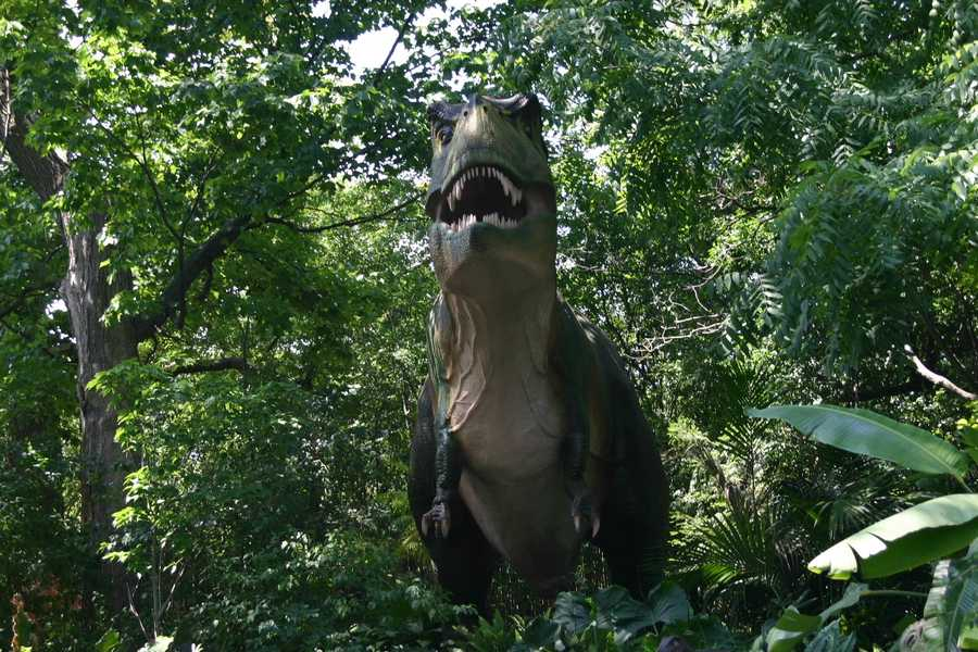 "Tyrannosaurus Rex or ""Tyrant Lizard King"" may be the most well known dinosaur."