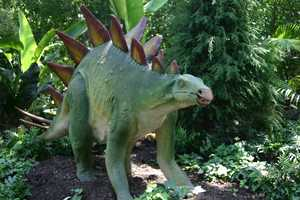 "Western North America was home to the plant-eating Stegosaurus (STEG-oh-SORE-us) or ""Roof Lizard"" in the late Jurassic period."