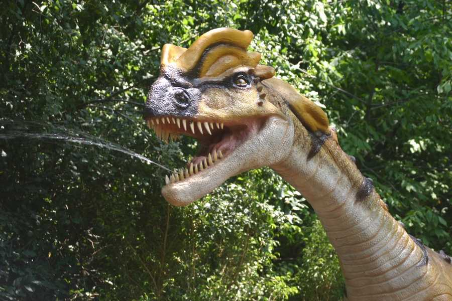 "Watch out as the Dilophosaurus (dyi-LOAF-o-SORE-us) or ""Two-Creseted Reptile"" spits (water!).  This might actually feel good on a hot day at the zoo."